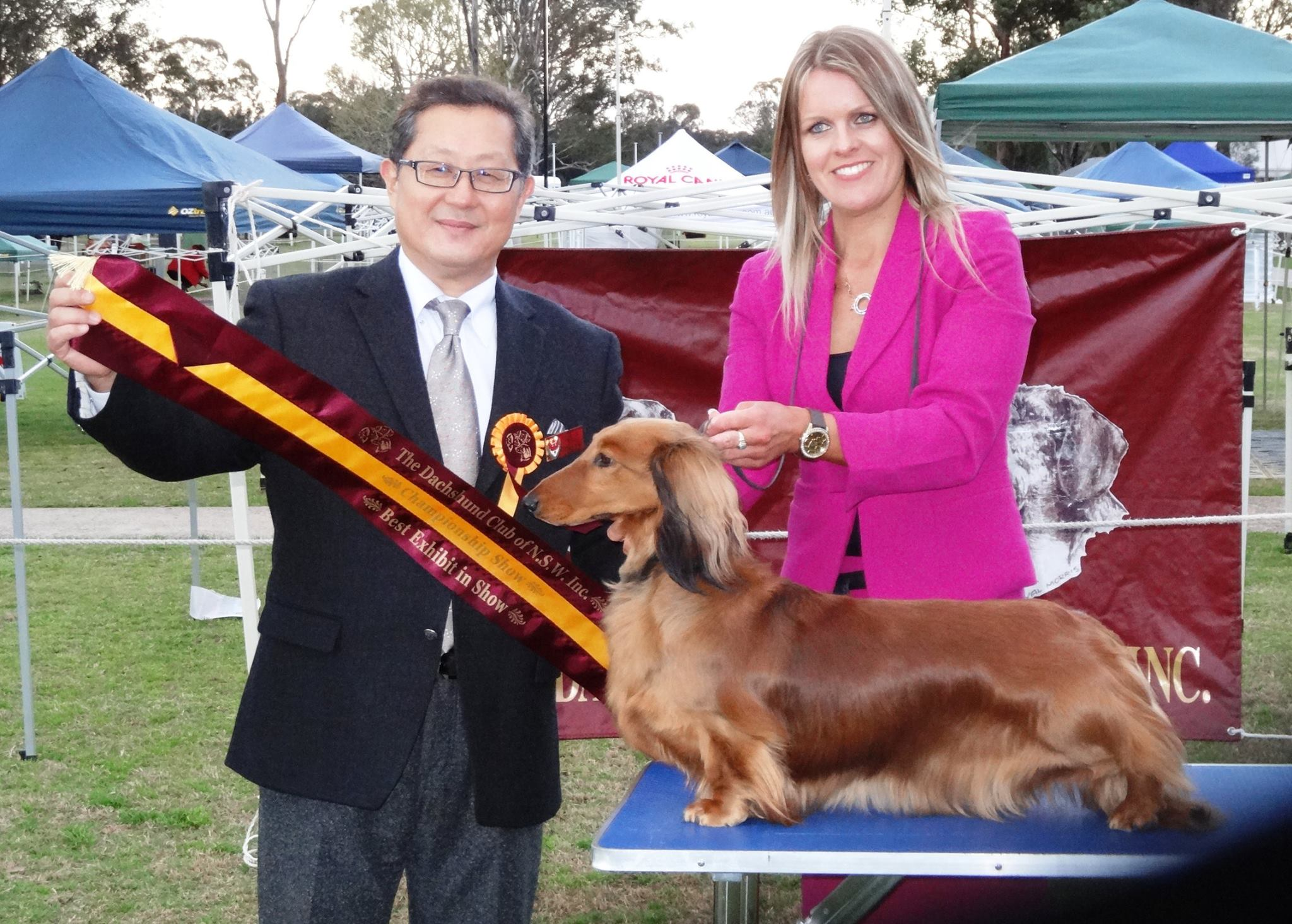 Liberty BIS Dachshund Club of NSW
