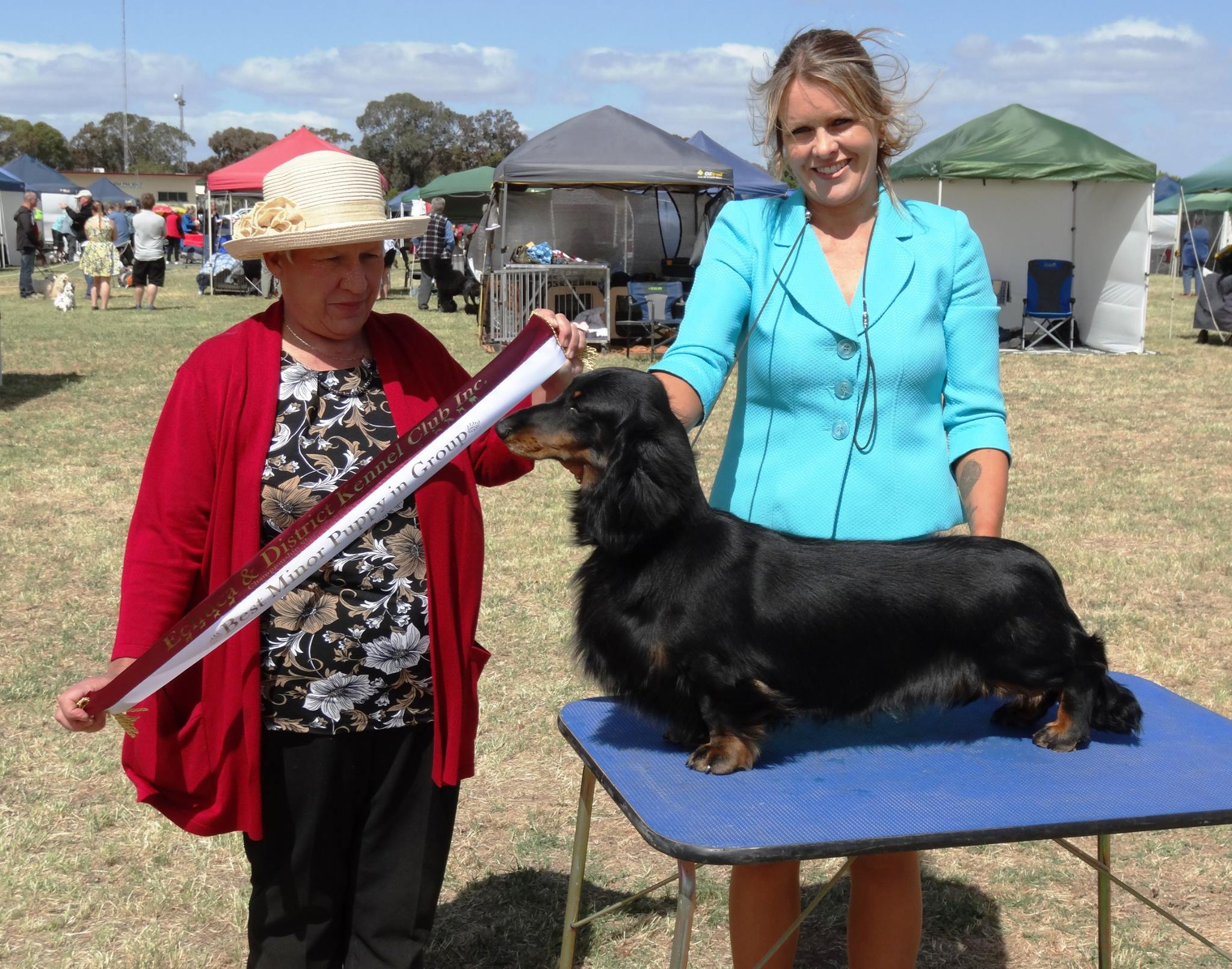 'Ringo' Wins Best Minor Puppy in Group