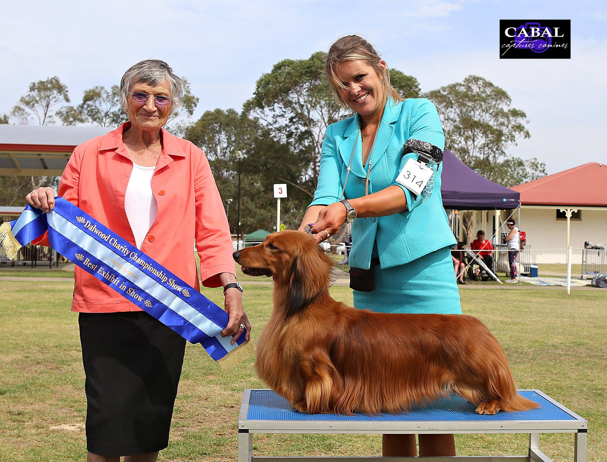 'Jimmy' wins back-to-back Best in Show at the Dalwood Children's Home Charity Show ('BLUE SHOW')!