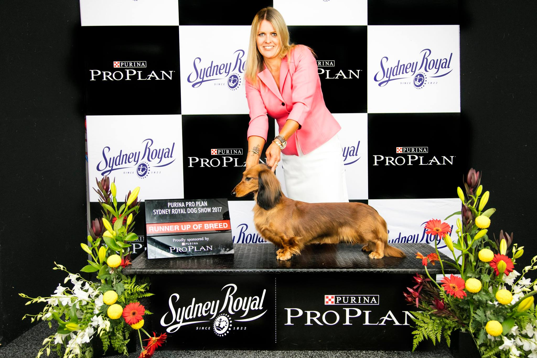 Angie Wins Bitch Challenge & Runner-Up Best of Breed at Sydney Royal Show.