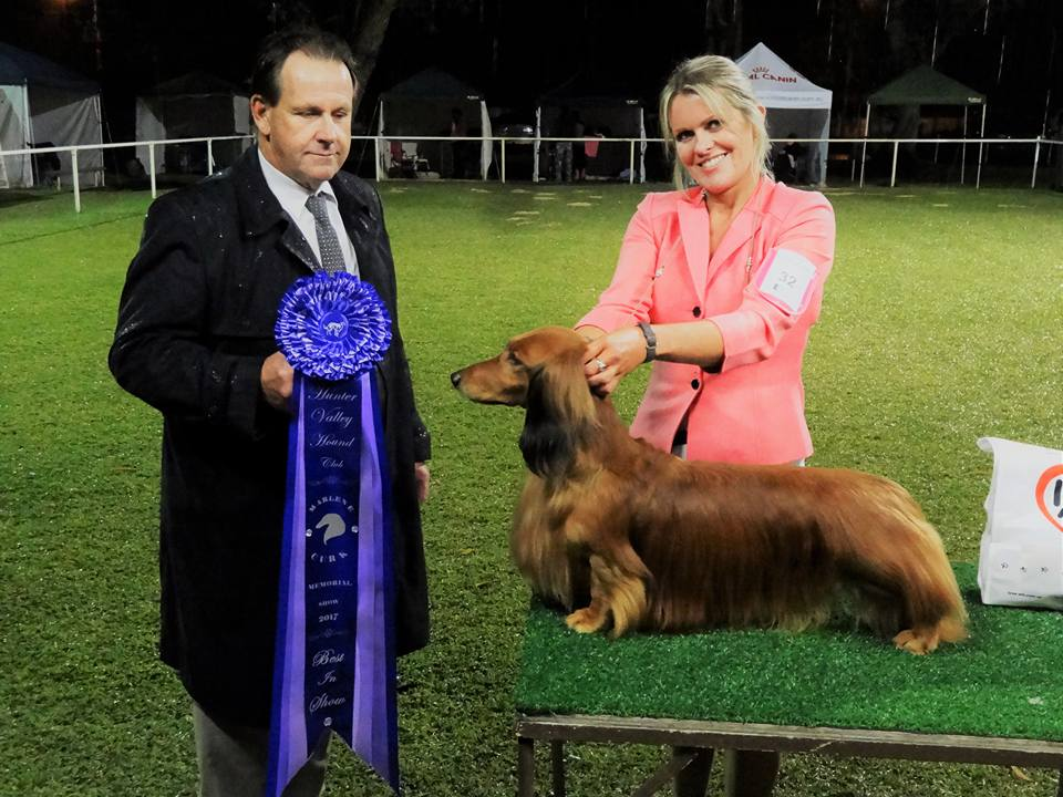 Jimmy wins two back-to-back BEST IN SPECIALITY SHOW awards!