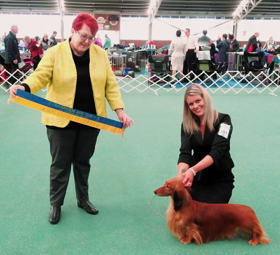 Jimmy wins Runner-Up Best in Show at Cranbourne Dog Club!
