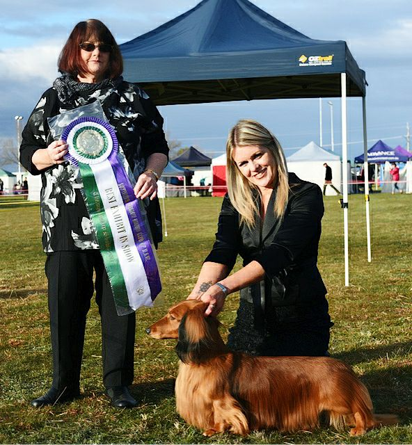 Jimmy wins another Best in Specialty Show (BISS) at the Southern Region Hound Club of NSW show!
