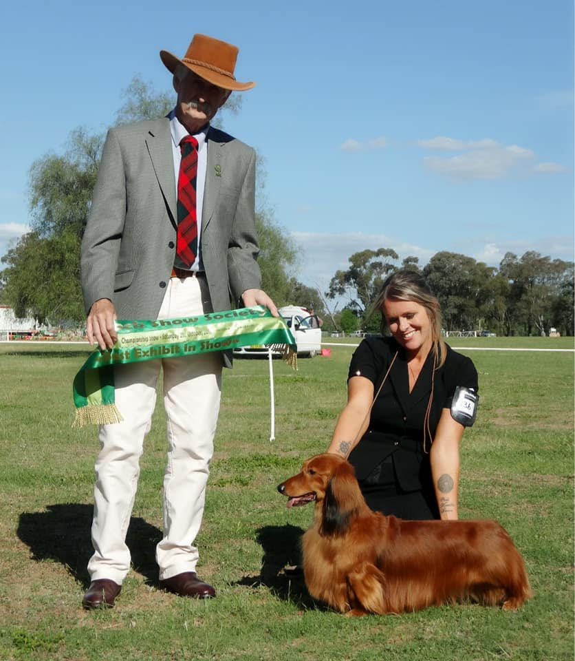 What an amazing 2 days we had on our little road-trip this weekend with Australian Supreme Champion Charlmagne Jimmy Choo (AI) out-doing himself again to win back-to-back BEST IN SHOW (BIS1) awards!