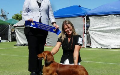 'Jimmy' Wins His 19th Best in Show Award!
