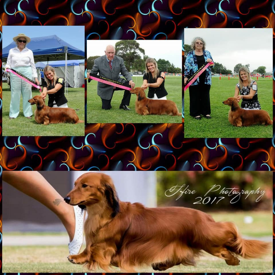 Jimmy's Fabulous Weekend at the Portland & District Kennel Club championship shows!